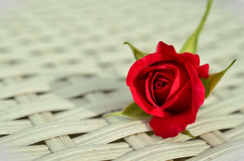 rose-red-rose-romantic-rose-bloom